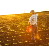 Farmer looking at horizon