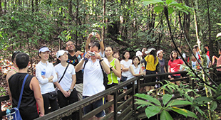 Alumni on Singapore Tree-top Walk