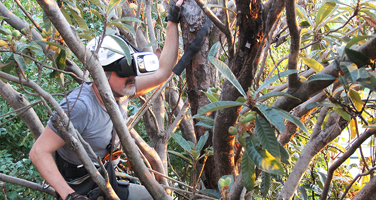 UniSA Researcher in a fig tree