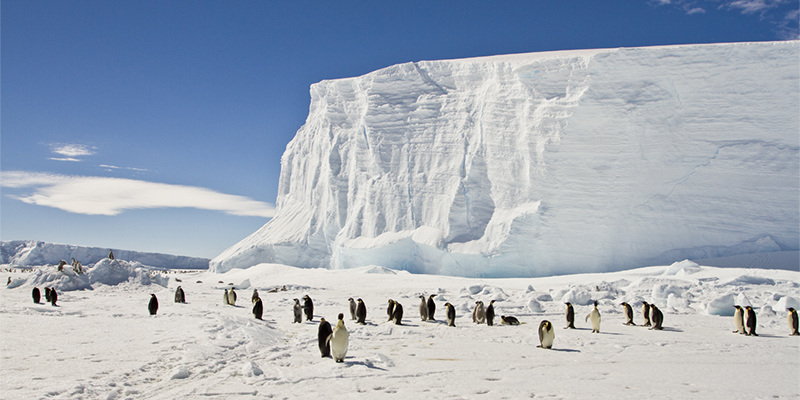 Emperor penguins on the sea ice of East Antarctica.